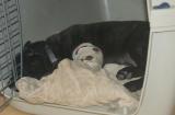 Gipsbeinchen schläft brav in der Box